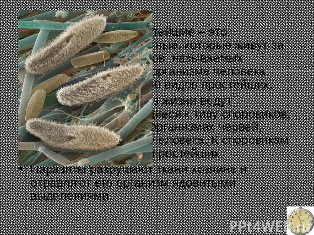 Паразитические простейшие – это одноклеточные животные, которые живут за счет других организмов, называемых хозяевами. Только в организме человека паразитирует около 30 видов простейших. Паразитический образ жизни ведут простейшие, относящиеся к тип…