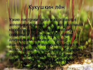 Кукушкин лён Узкие листочки этого мха остаются зелеными круглый год, а вот оваль