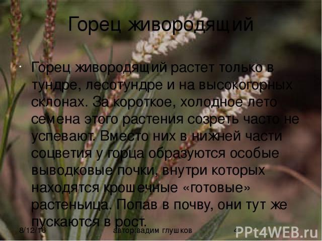 Горец живородящий Горец живородящий растет только в тундре, лесотундре и на высокогорных склонах. За короткое, холодное лето семена этого растения созреть часто не успевают. Вместо них в нижней части соцветия у горца образуются особые выводковые поч…