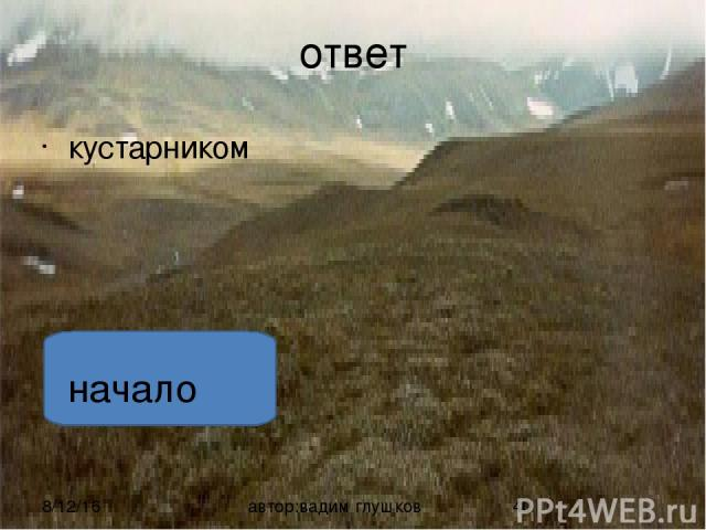 ответ . Растет голубика в заболоченной тундре и высоко в горах автор:вадим глушков начало