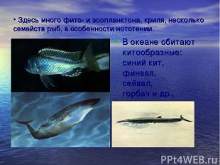 Здесь много фито- и зоопланктона, криля, несколько семейств рыб, в особенности н