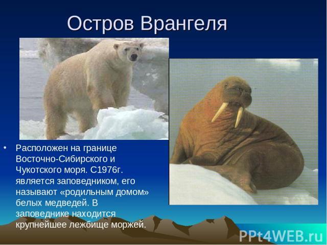 Остров Врангеля Расположен на границе Восточно-Сибирского и Чукотского моря. С1976г. является заповедником, его называют «родильным домом» белых медведей. В заповеднике находится крупнейшее лежбище моржей.