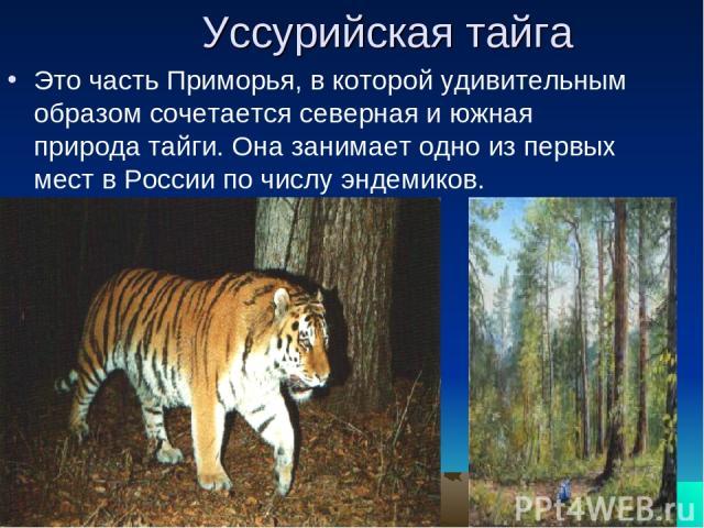 Уссурийская тайга Это часть Приморья, в которой удивительным образом сочетается северная и южная природа тайги. Она занимает одно из первых мест в России по числу эндемиков.