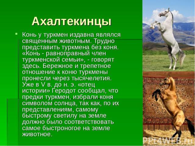 Ахалтекинцы Конь у туркмен издавна являлся священным животным. Трудно представить туркмена без коня. «Конь - равноправный член туркменской семьи», - говорят здесь. Бережное и трепетное отношение к коню туркмены пронесли через тысячелетия. Уже в V в.…
