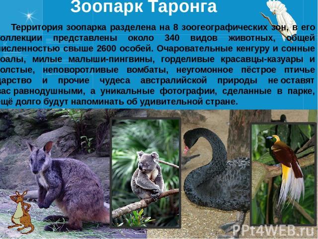 Зоопарк Таронга Территория зоопарка разделена на 8 зоогеографических зон, в его коллекции представлены около 340 видов животных, общей численностью свыше 2600 особей. Очаровательные кенгуру и сонные коалы, милые малыши-пингвины, горделивые красавцы-…