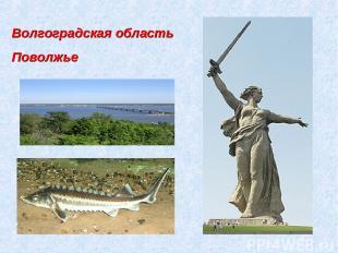 Волгоградская область Поволжье