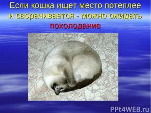 Если кошка ищет место потеплее и сворачивается - можно ожидать похолодание