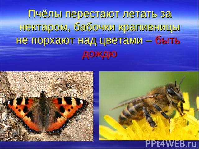 Пчёлы перестают летать за нектаром, бабочки крапивницы не порхают над цветами – быть дождю