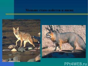 Меньше стало койотов и лисиц