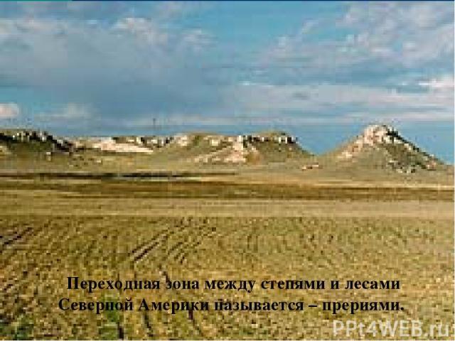 Переходная зона между степями и лесами Северной Америки называется – прериями.