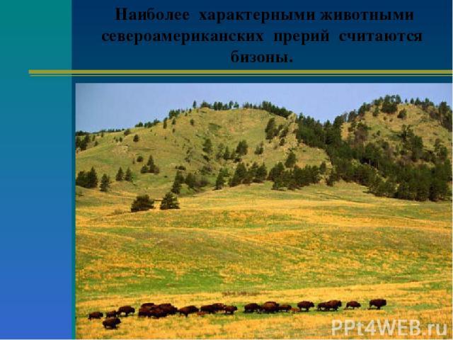 Наиболее характерными животными североамериканских прерий считаются бизоны.