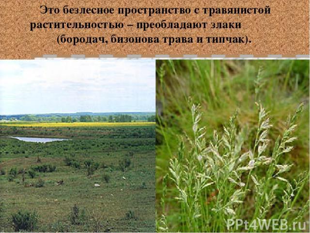Это безлесное пространство с травянистой растительностью – преобладают злаки (бородач, бизонова трава и типчак).