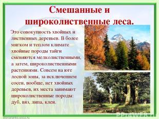 Смешанные и широколиственные леса. Это совокупность хвойных и лиственных деревье