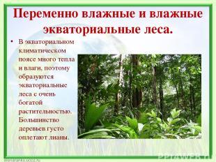 Переменно влажные и влажные экваториальные леса. В экваториальном климатическом