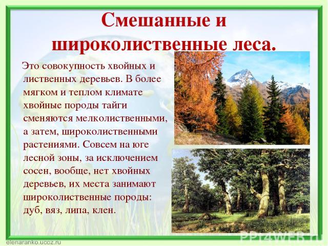 Смешанные и широколиственные леса. Это совокупность хвойных и лиственных деревьев. В более мягком и теплом климате хвойные породы тайги сменяются мелколиственными, а затем, широколиственными растениями. Совсем на юге лесной зоны, за исключением сосе…