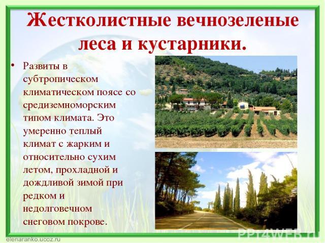 Жестколистные вечнозеленые леса и кустарники. Развиты в субтропическом климатическом поясе со средиземноморским типом климата. Это умеренно теплый климат с жарким и относительно сухим летом, прохладной и дождливой зимой при редком и недолговечном сн…