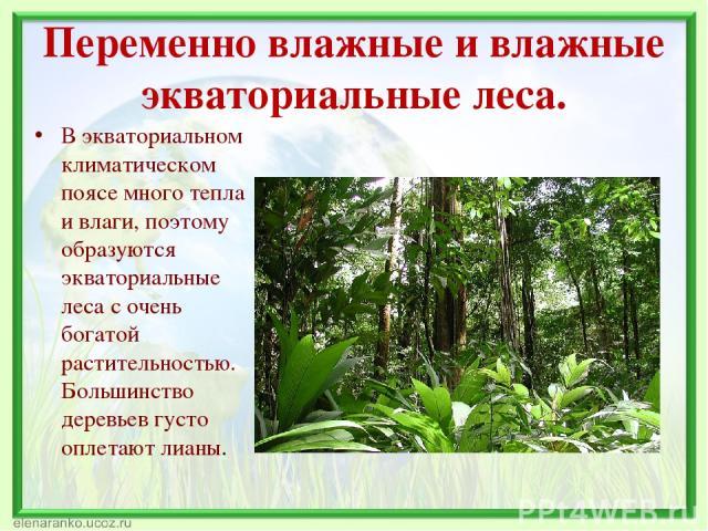 Переменно влажные и влажные экваториальные леса. В экваториальном климатическом поясе много тепла и влаги, поэтому образуются экваториальные леса с очень богатой растительностью. Большинство деревьев густо оплетают лианы.