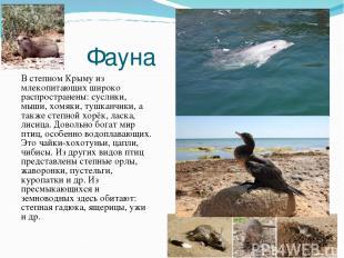 Фауна В степном Крыму из млекопитающих широко распространены: суслики, мыши, хом