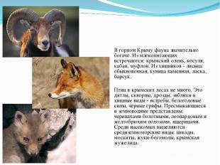 Фауна В горном Крыму фауна значительно богаче. Из млекопитающих встречаются: кры