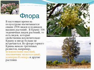 Флора В настоящее время на полуострове насчитывается свыше 2536 видов и подвидов