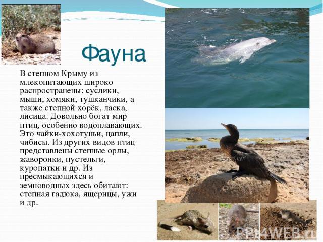 Фауна В степном Крыму из млекопитающих широко распространены: суслики, мыши, хомяки, тушканчики, а также степной хорёк, ласка, лисица. Довольно богат мир птиц, особенно водоплавающих. Это чайки-хохотуньи, цапли, чибисы. Из других видов птиц представ…