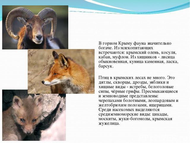 Фауна В горном Крыму фауна значительно богаче. Из млекопитающих встречаются: крымский олень, косуля, кабан, муфлон. Из хищников - лисица обыкновенная, куница каменная, ласка, барсук. Птиц в крымских лесах не много. Это дятлы, скворцы, дрозды, зяблик…