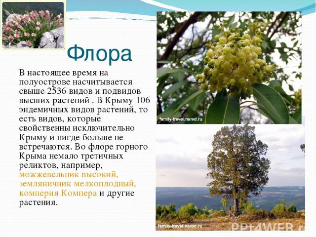 Флора В настоящее время на полуострове насчитывается свыше 2536 видов и подвидов высших растений . В Крыму 106 эндемичных видов растений, то есть видов, которые свойственны исключительно Крыму и нигде больше не встречаются. Во флоре горного Крыма не…