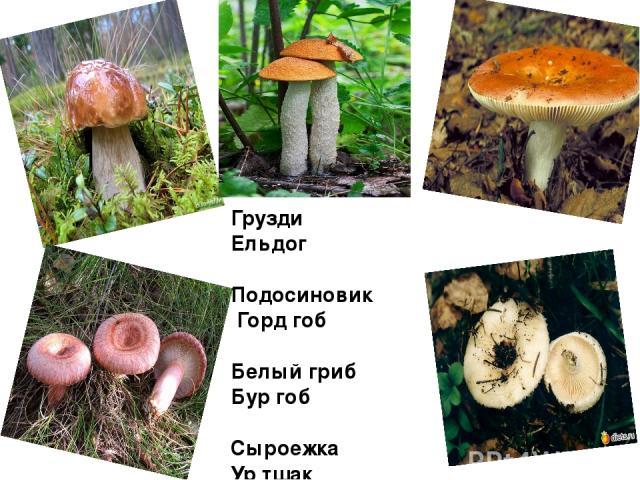 Белый гриб перевод