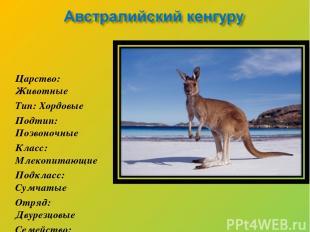 Царство: Животные Тип: Хордовые Подтип: Позвоночные Класс: Млекопитающие Подклас