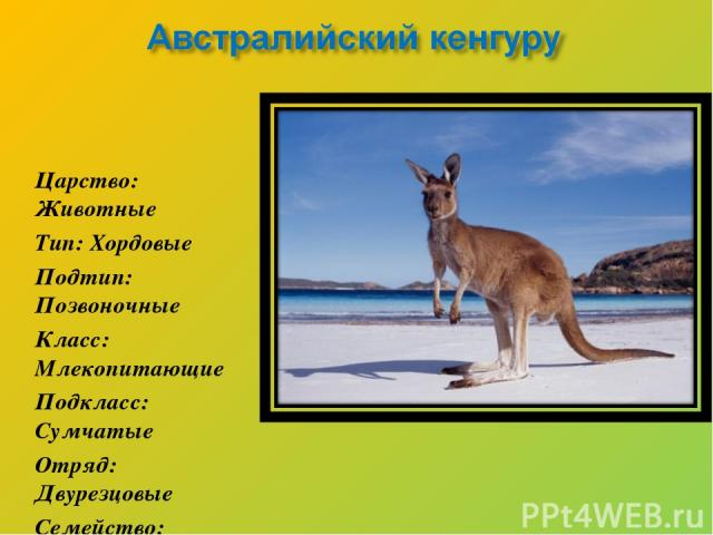 Царство: Животные Тип: Хордовые Подтип: Позвоночные Класс: Млекопитающие Подкласс: Сумчатые Отряд: Двурезцовые Семейство: Кенгуровые Род: Кенгуру