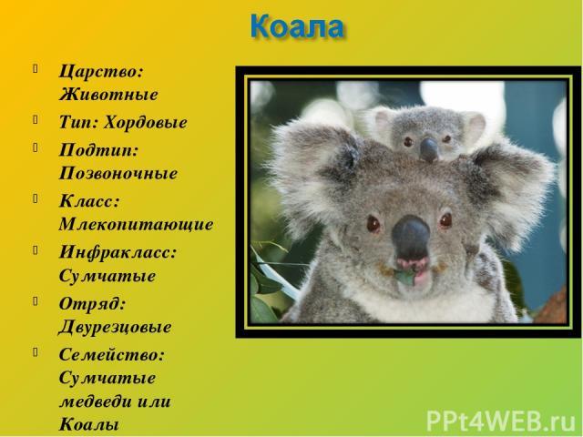 Царство: Животные Тип: Хордовые Подтип: Позвоночные Класс: Млекопитающие Инфракласс: Сумчатые Отряд: Двурезцовые Семейство: Сумчатые медведи или Коалы Род: Коала Вид: Коала