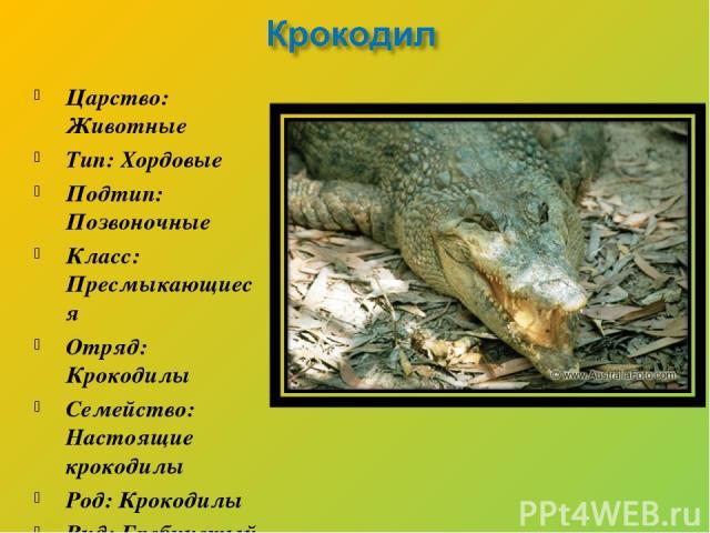 Царство: Животные Тип: Хордовые Подтип: Позвоночные Класс: Пресмыкающиеся Отряд: Крокодилы Семейство: Настоящие крокодилы Род: Крокодилы Вид: Гребнистый крокодил