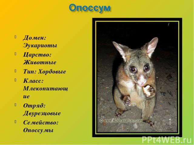 Домен: Эукариоты Царство: Животные Тип: Хордовые Класс: Млекопитающие Отряд: Двурезцовые Семейство: Опоссумы