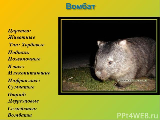 Царство: Животные Тип: Хордовые Подтип: Позвоночные Класс: Млекопитающие Инфракласс: Сумчатые Отряд: Двурезцовые Семейство: Вомбаты
