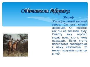 Обитатели Африки Жираф Жираф – самый высокий зверь. Он ест листья деревьев. Он п
