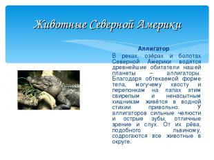 Животные Северной Америки Аллигатор В реках, озёрах и болотах Северной Америки в