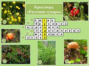 Кроссворд «Растения тундры» т у н д р а л ю и к б 1 2 3 4 5 6 1 2 3 4 5 6 и а р