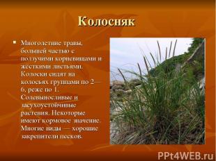 Колосняк Многолетние травы, большей частью с ползучими корневищами и жёсткими ли