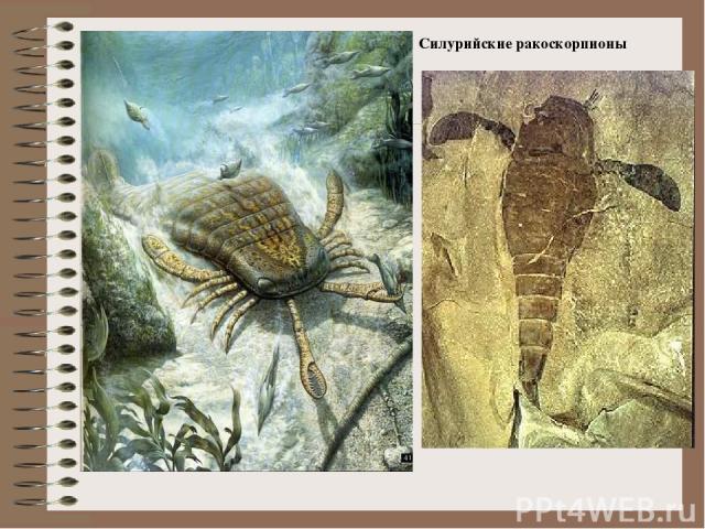 Силурийские ракоскорпионы