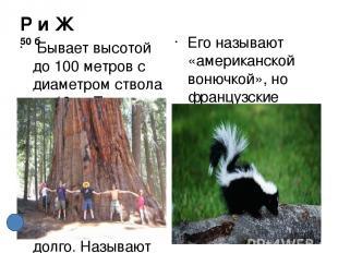 Используемая литература. Автор использовал фотографии из поисковой системы Yande