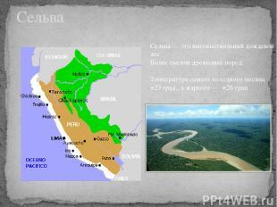 Сельва Сельва — это высокоствольный дождевой лес Более тысячи древесных пород Те