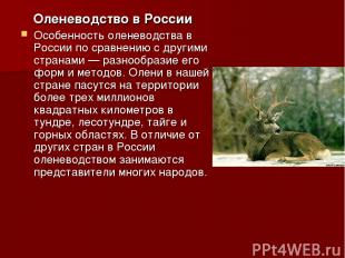 Оленеводство в России Особенность оленеводства в России по сравнению с другими с
