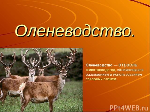 Оленеводство. Оленеводство— отрасль животноводства, занимающаяся разведением и использованием северных оленей.