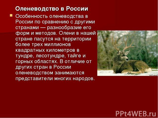Оленеводство в России Особенность оленеводства в России по сравнению с другими странами — разнообразие его форм и методов. Олени в нашей стране пасутся на территории более трех миллионов квадратных километров в тундре, лесотундре, тайге и горных обл…