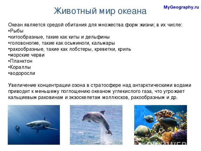Животный мир океана Океан является средой обитания для множества форм жизни; в их числе: Рыбы китообразные, такие как киты и дельфины головоногие, такие как осьминоги, кальмары ракообразные, такие как лобстеры, креветки, криль морские черви Планктон…