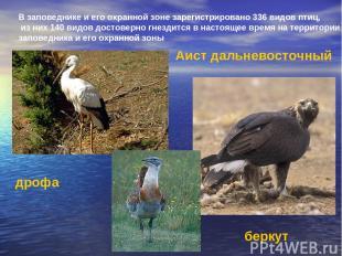 В заповеднике и его охранной зоне зарегистрировано 336 видов птиц, из них 140 ви