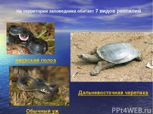 На территории заповедника обитает 7 видов рептилий амурский полоз Обычный уж Дал