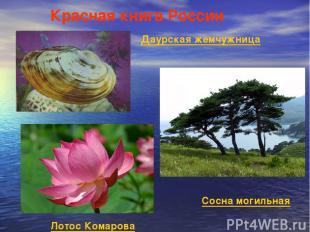 Красная книга России Даурская жемчужница Лотос Комарова Сосна могильная