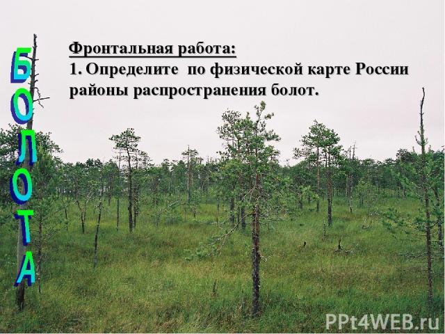 Фронтальная работа: Определите по физической карте России районы распространения болот.