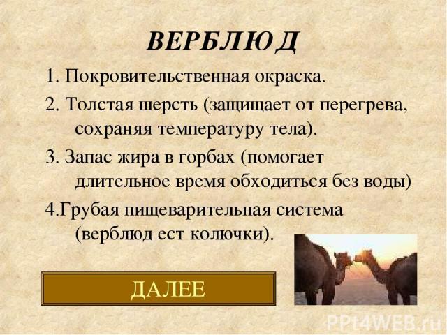 ВЕРБЛЮД 1. Покровительственная окраска. 2. Толстая шерсть (защищает от перегрева, сохраняя температуру тела). 3. Запас жира в горбах (помогает длительное время обходиться без воды) 4.Грубая пищеварительная система (верблюд ест колючки).